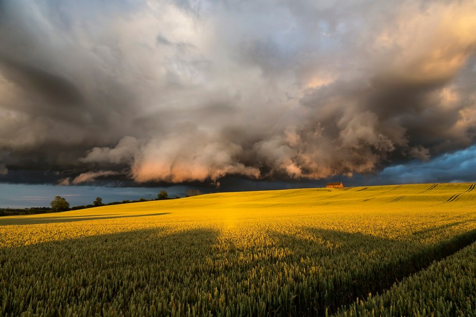 A vast rain cloud moving over a wheat crop, illuminated by evening sunlight.