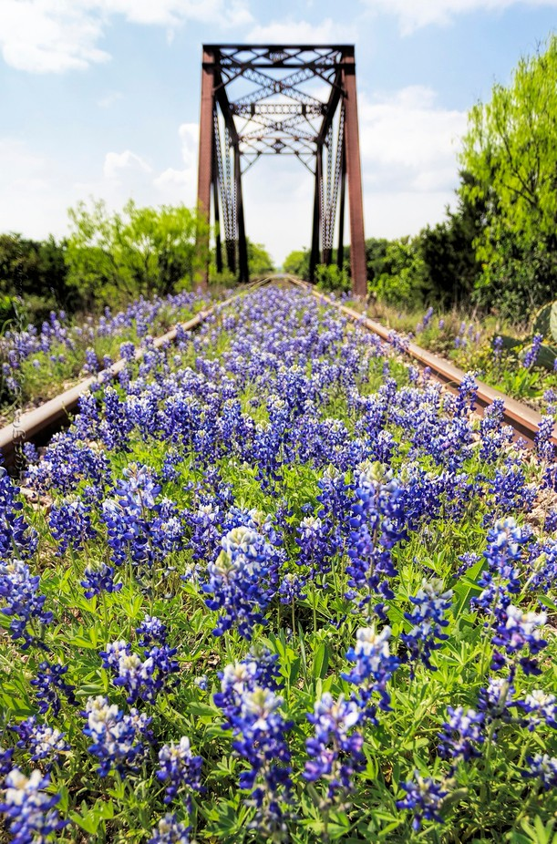 Bluebonnet Railroad 01a by blairwacha - Empty Railways Photo Contest