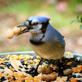 I love to watch birds close-up and have set my feeders close to large windows. They learn I am behind glass, and mean them no harm, they even lik...