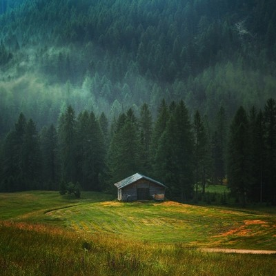 A lonely cottage in the misty forest