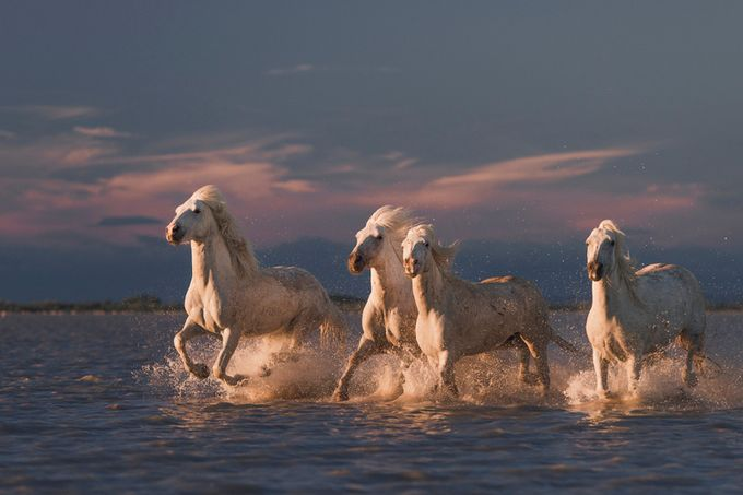 Angels_of_Camargue by Rostovskiy - The Beauty Of Nature Photo Contest