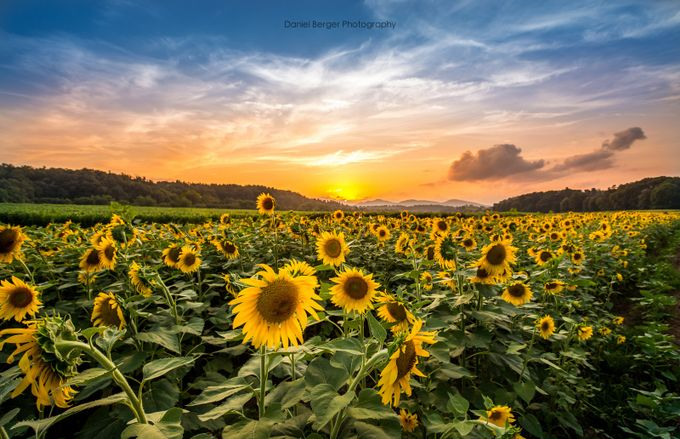 Biltmore Sunset by dberger - Beautiful Flowers Photo Contest