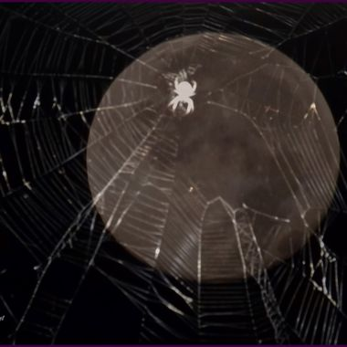 Shot a spider in it's web and the Blue Moon of July 2015...layered the two together. I think it is a great Halloween shot