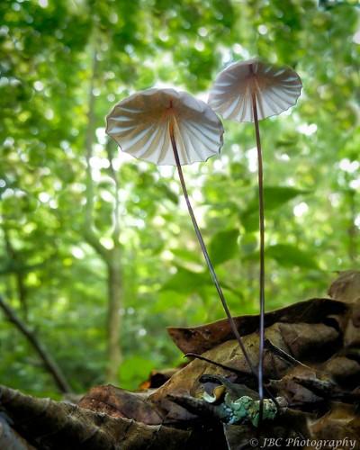 Pinwheel Mushrooms by Theo-Herbots-Fotograaf