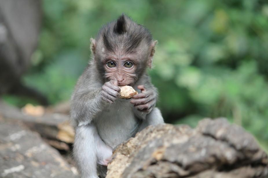 baby monkey eats