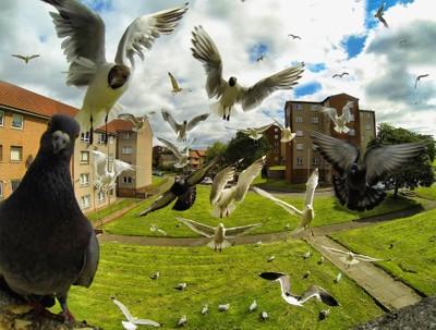 Composite Birds