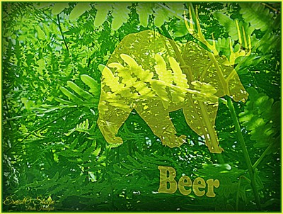 Beer Walking Like A Bear In The Bracken Ferns