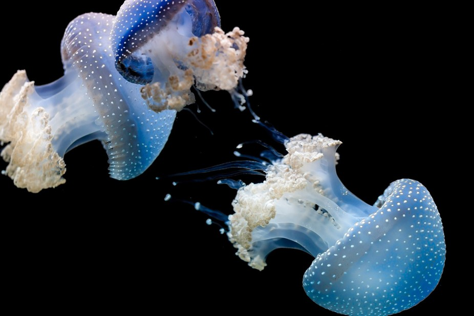 I once a upon a time had an obsession of photographing jelly fish.  Then the exhibition ended at ...