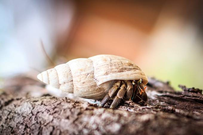 Shelly by bdenhartog - Shallow Depth Of Field Photo Contest