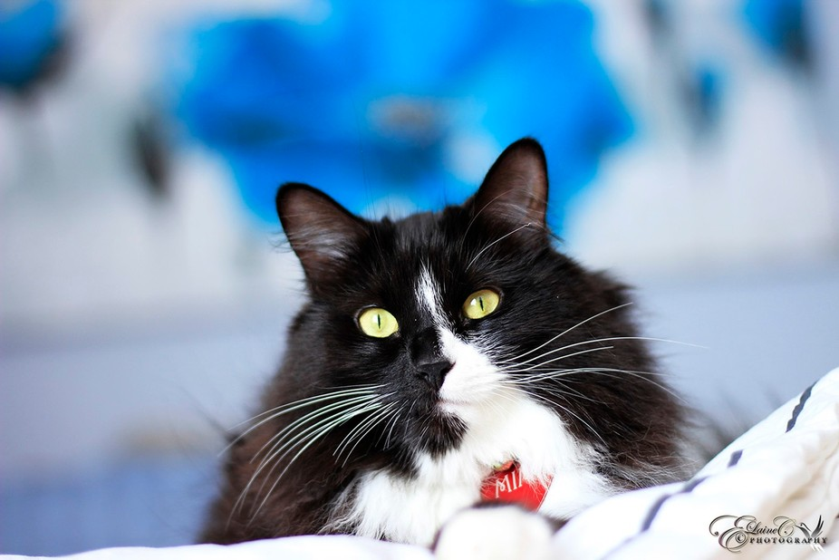 Cat Facts: ♥ The more you speak to your cat, the more it will speak to you. ♥