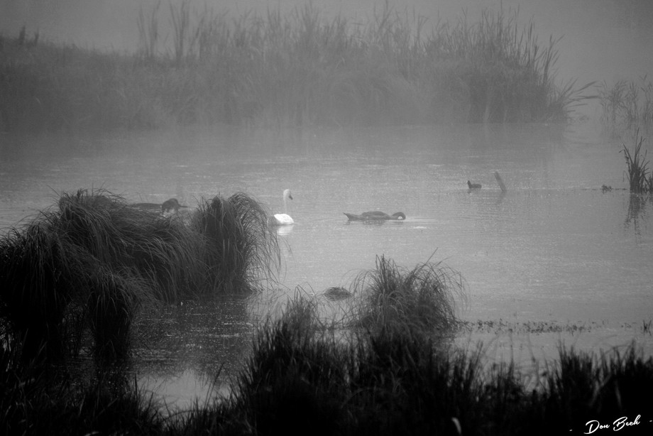 Photo taken at Ängsö Sweden a foggy morning