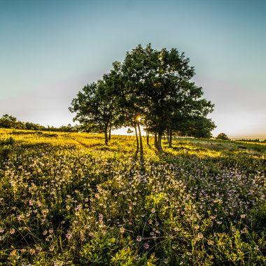 Shenandoah Wildflowers
