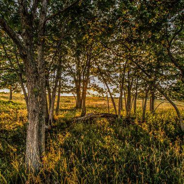 Shenandoah NP Big Meadows Oaks