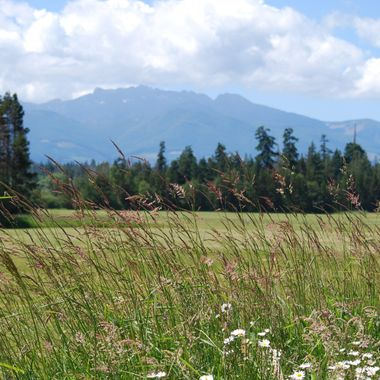 Walk near Winchelsea Elementary school, fields to Mt Arrowsmith, Parksville, BC - June 2015