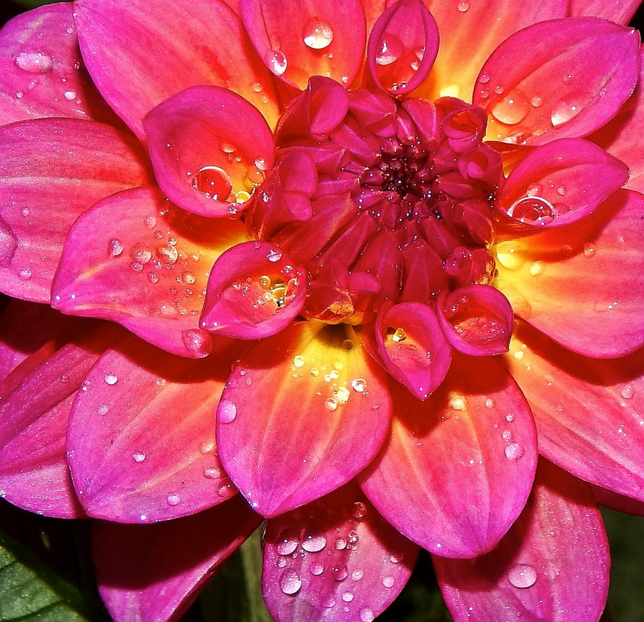 Fresh as the Morning Dew 2