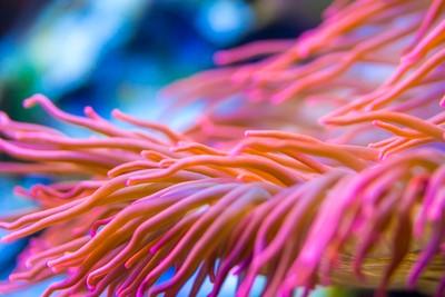 colorful coralls