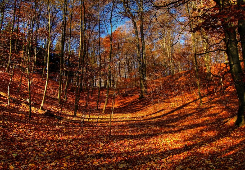 autumn-forrrest-hdr-1361201
