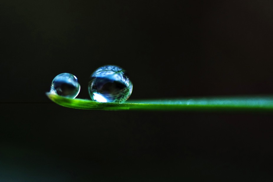 Dew Drops on a Blade of Grass