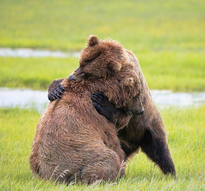 BEAR HUG by Cobble-Art - Bears Photo Contest