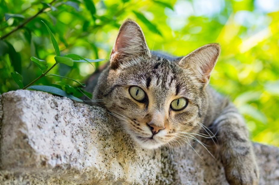 Cat lying on a stone