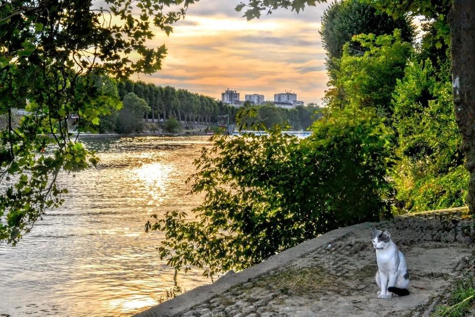 Val de Marne's view under the Vieux Saint-Maur bridge. The cat just stop to catch, hunti...