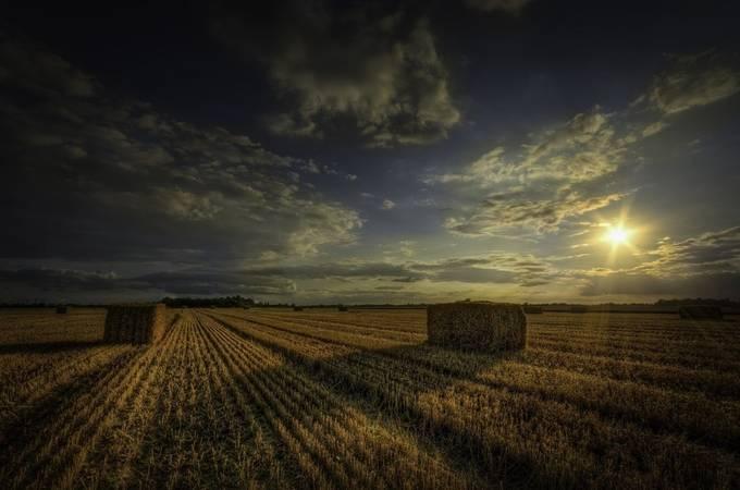 The harvest by Dickiebird - Dry Fields Photo Contest
