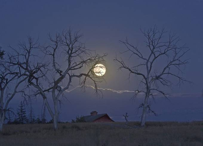 Dead Tree Moonrise by jimstennette - The Moonlight Photo Contest