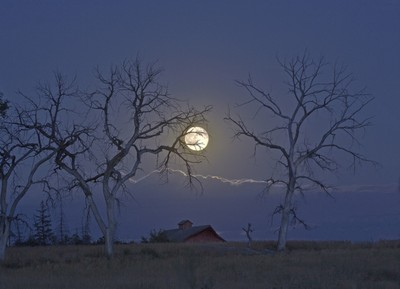 Dead Tree Moonrise
