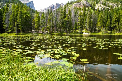 Rocky Mountain Lily Pads