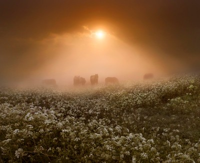 Emerging through the mists