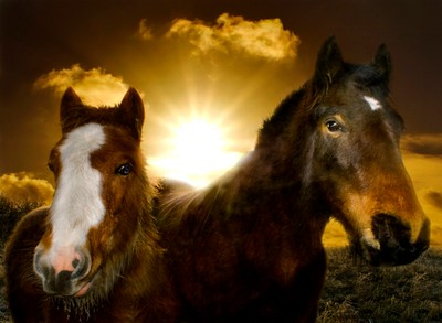 Bursting between two Horses