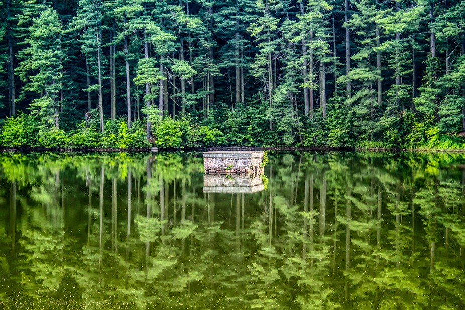 Reflections of the tall pines in the murky stagnant water of the birdsboro resevoir