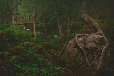 Roots UnDeep