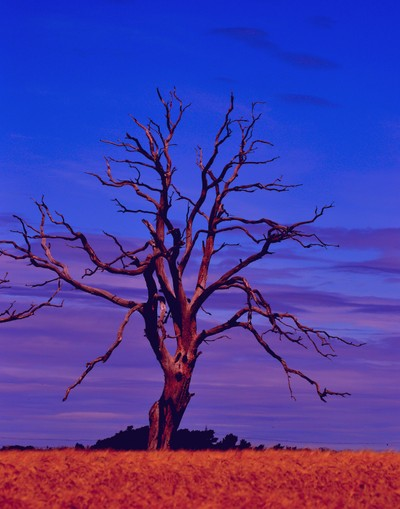 Ghost tree two