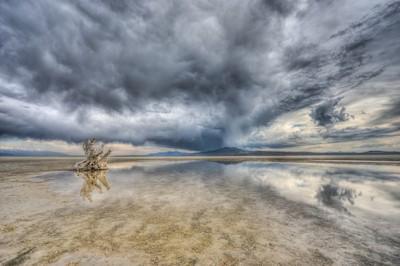 Lonely Stump - Great Salt Lake