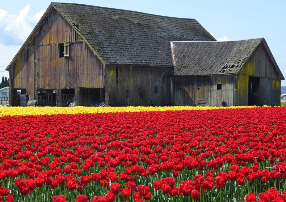 A beautiful day in a beautiful location during the spring tulip festival.