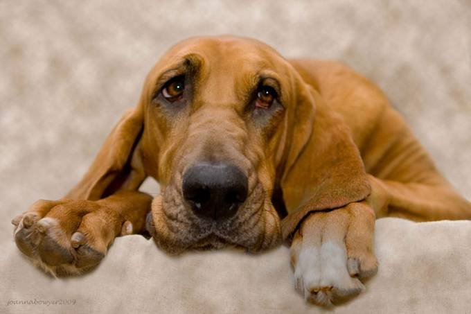 Karma Sad Hound by youaremyjoy - Pets With Character Photo Contest