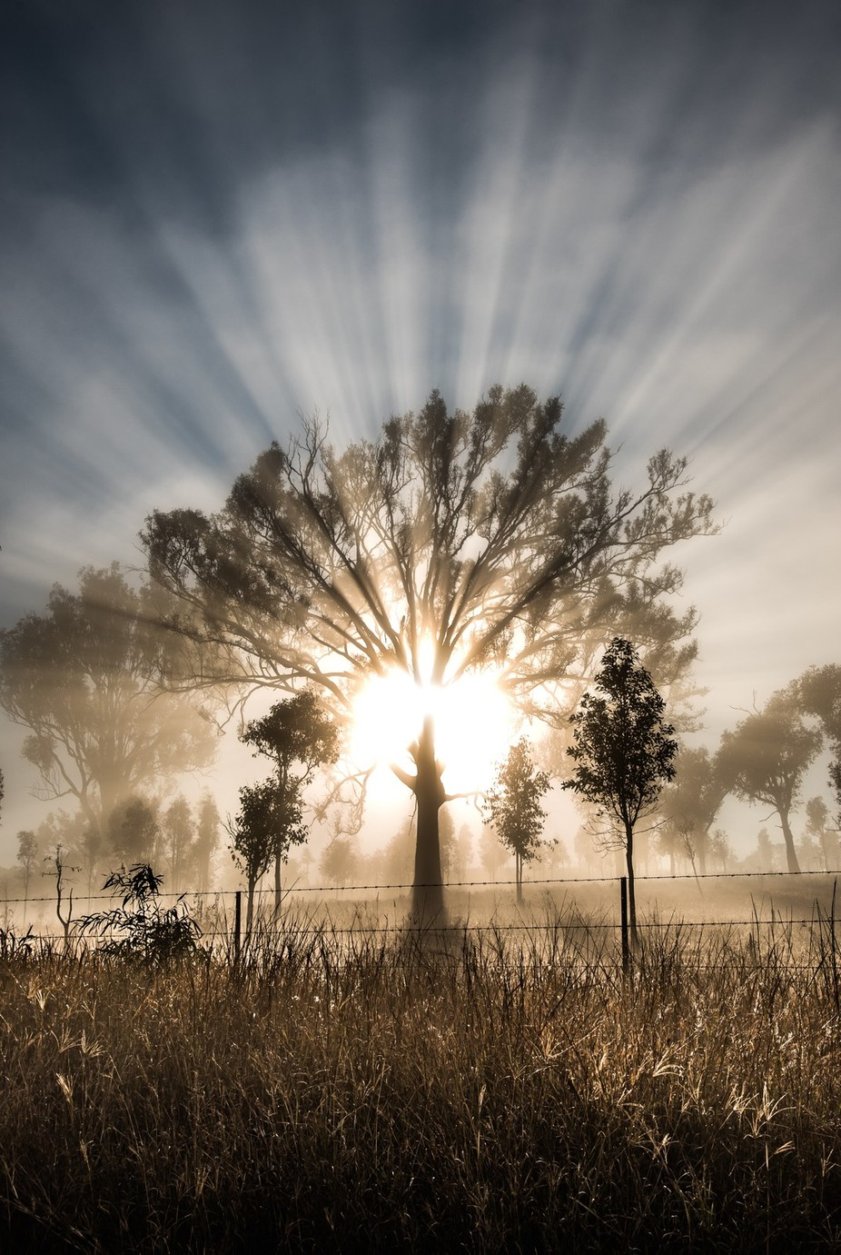 !!!!!!!A Little Ray Of Sunshine!!!!!!!! by bobbyd-skidmore - Mist And Drizzle Photo Contest