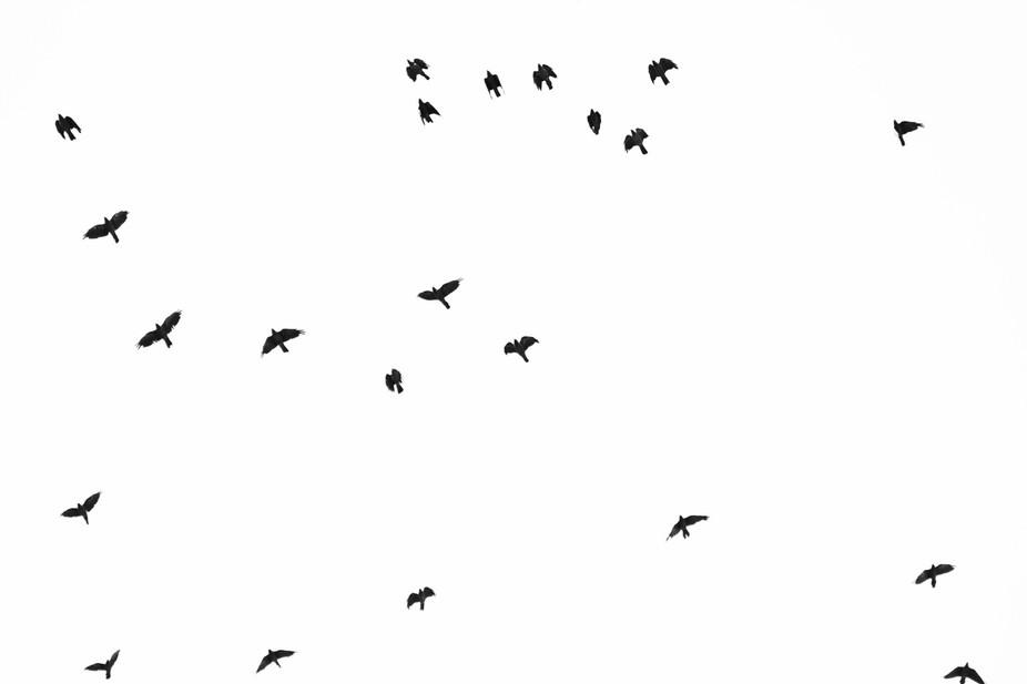 Stockholm birds