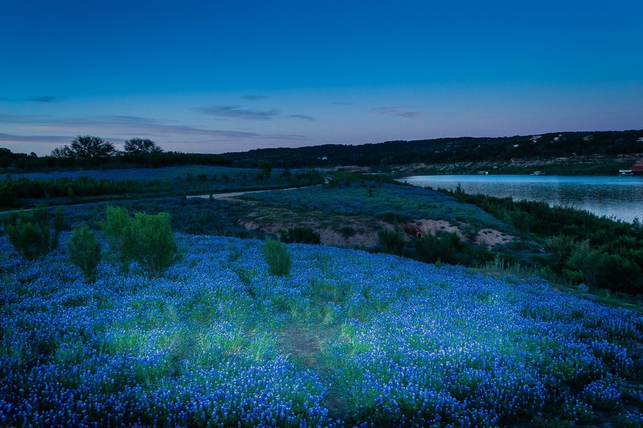 Tx finally got rain this year so we had lots of bluebonnets. (Muleshoe Bend Recreational Park, Sp...
