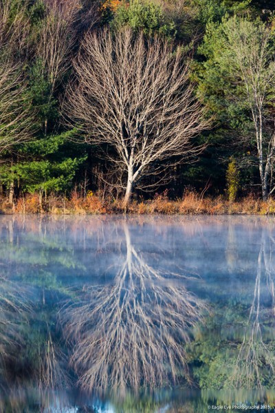 Mirror mirror on the pond - Turee Pond - Bow, NH 10-29-13