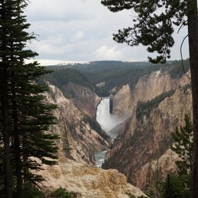 Taken at Yellowstone, lowerfalls. I like the way the trees frame the waterfall. It was awe-inspiring to see.