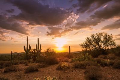 Desert Golden Hour