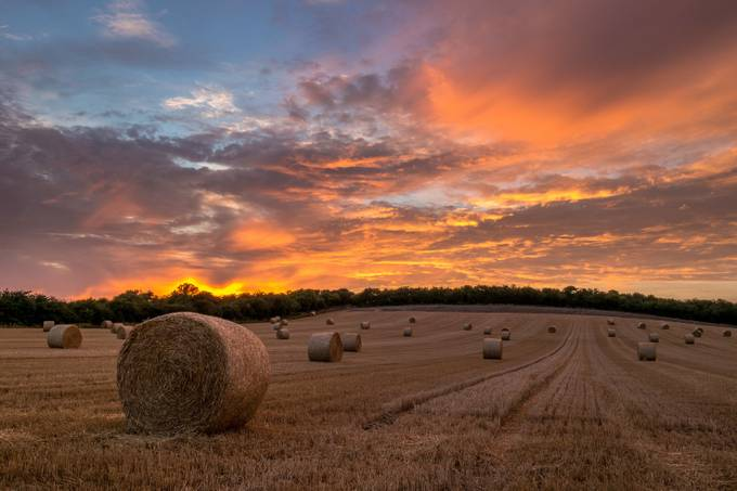 Summer glow by philbailey - Lost In The Field Photo Contest