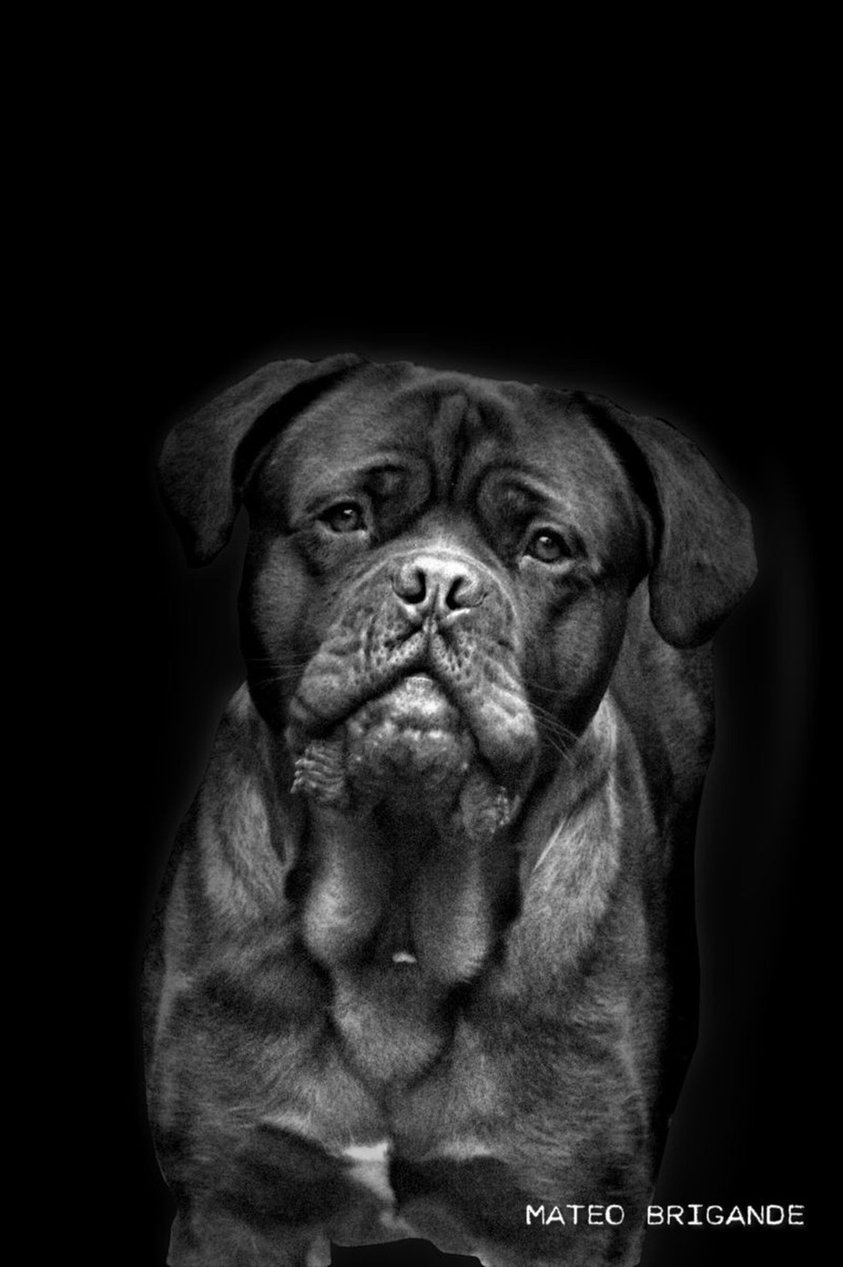 Hutch by mateobrigande - Only Pets Photo Contest