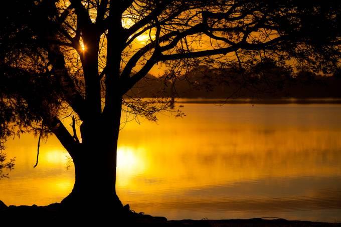 Sun Tree by DJMillard - Silhouettes Of Trees Photo Contest