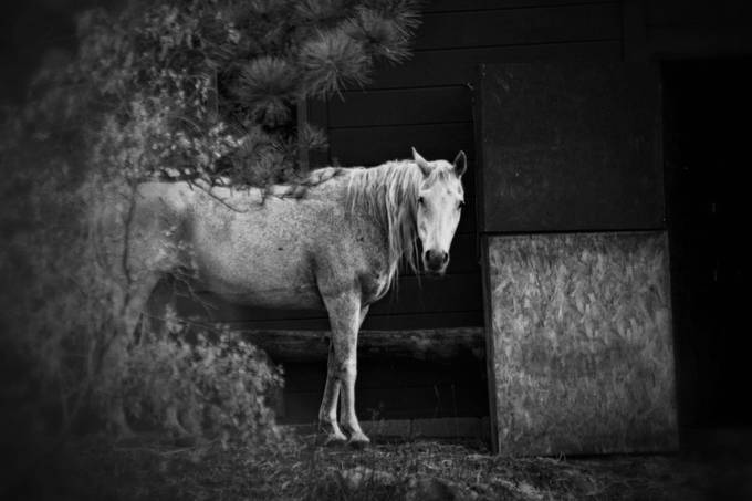 Horse by KatieMcKinneyPhotography - Farms And Barns Animals Photo Contest