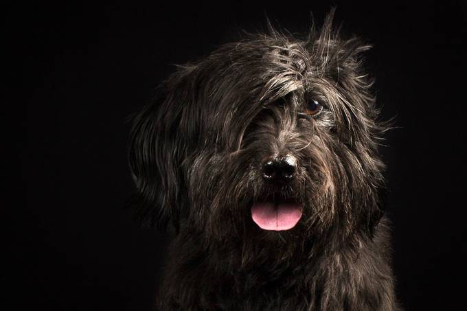My dog portraiture by thierryvouillamoz - Pets With Character Photo Contest