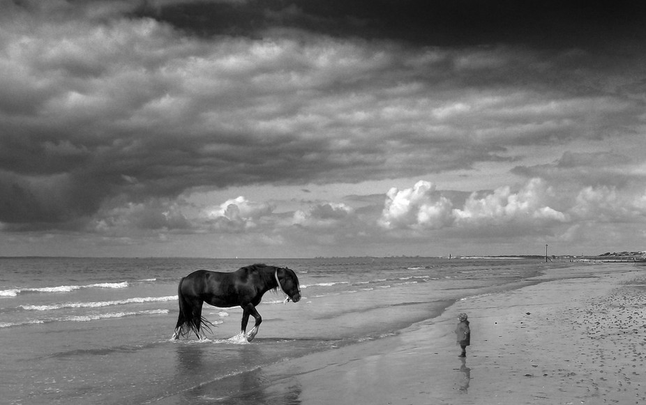 Horse & Kid pano