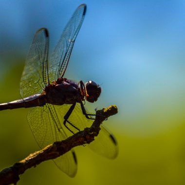 Random dragon fly, I took this at the North Carolina Zoo.
